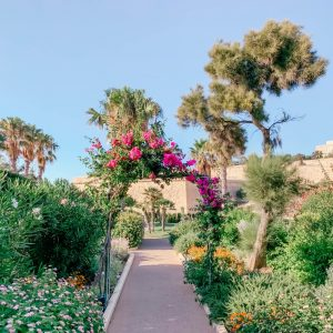 The Phoenicia Gardens