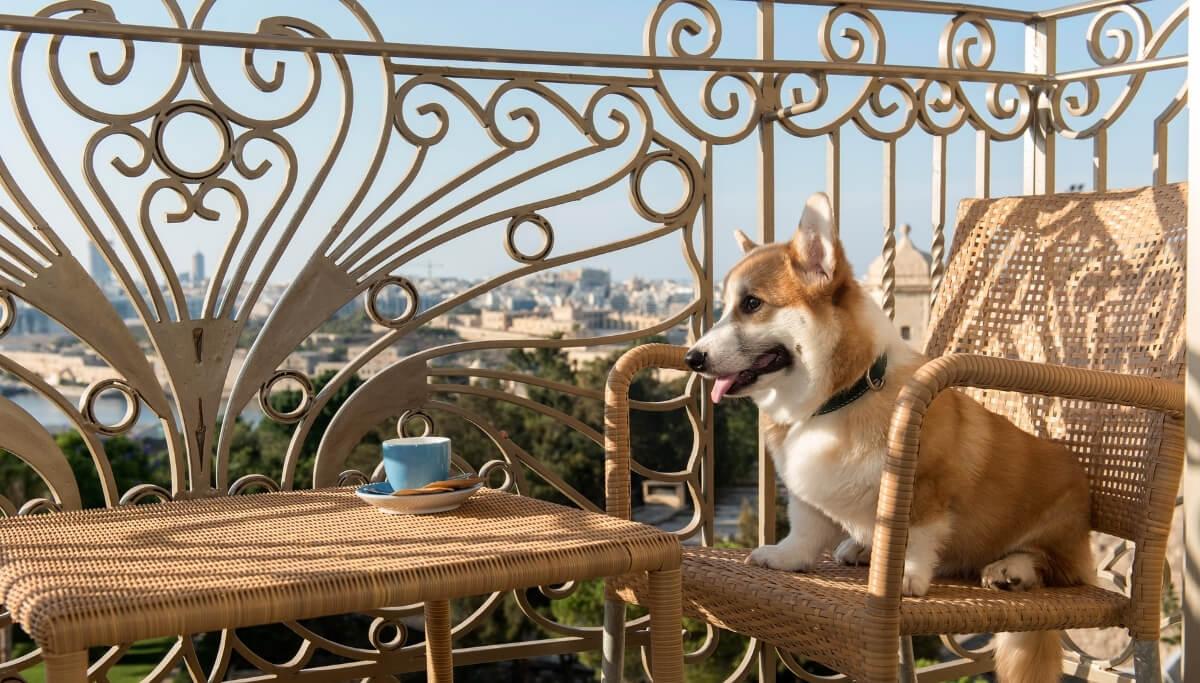 Pet Policy at The Phoenicia Malta